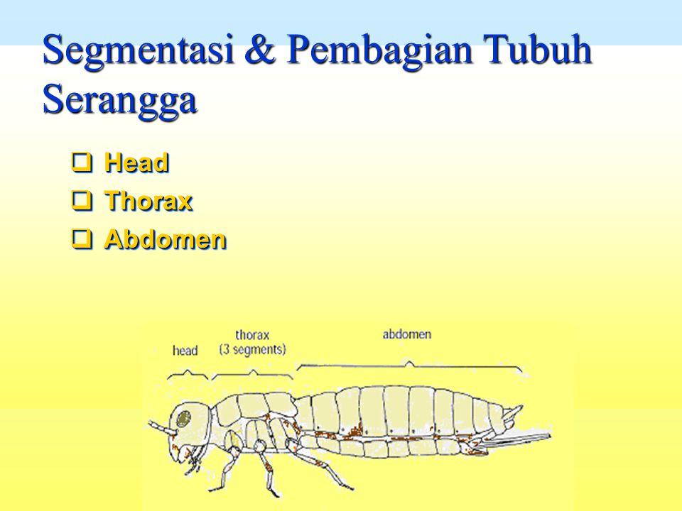Segmentasi & Pembagian Tubuh Serangga