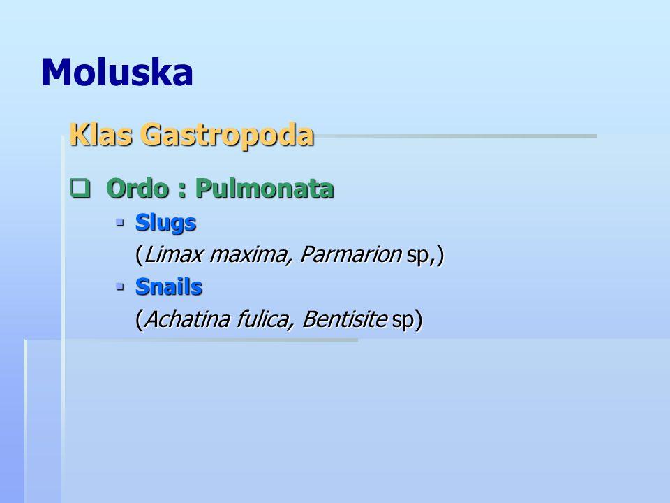 Moluska Klas Gastropoda Ordo : Pulmonata Slugs