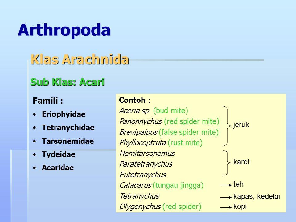 Arthropoda Klas Arachnida Sub Klas: Acari Famili : Contoh :