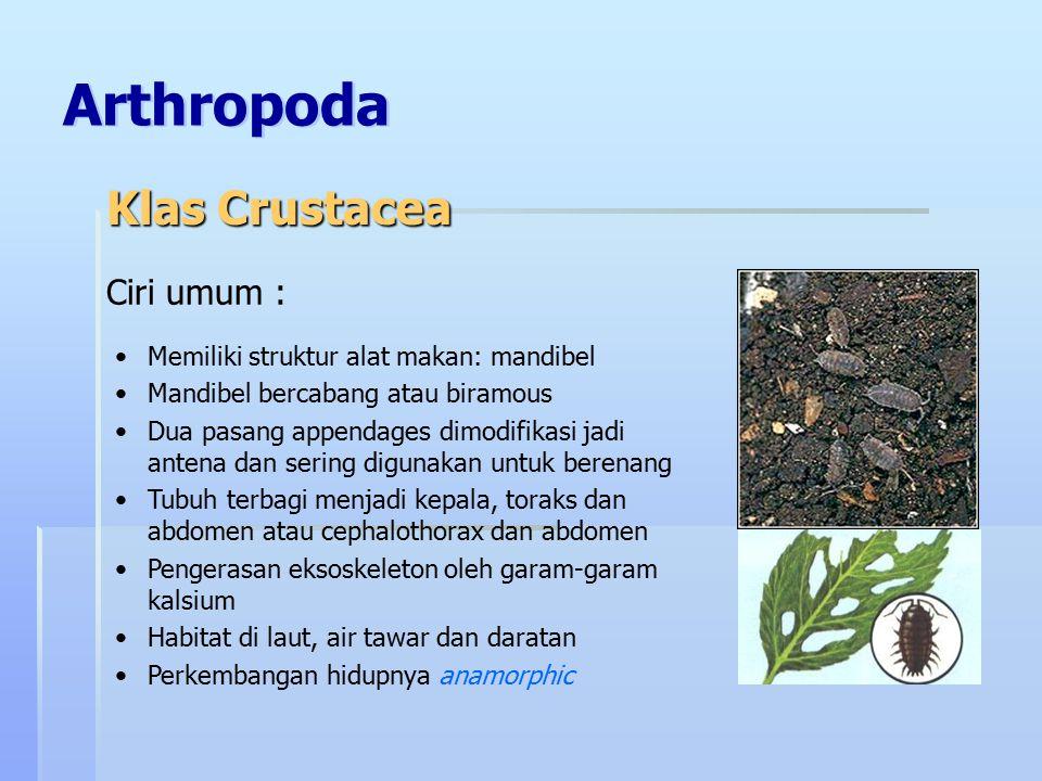Arthropoda Klas Crustacea Ciri umum :