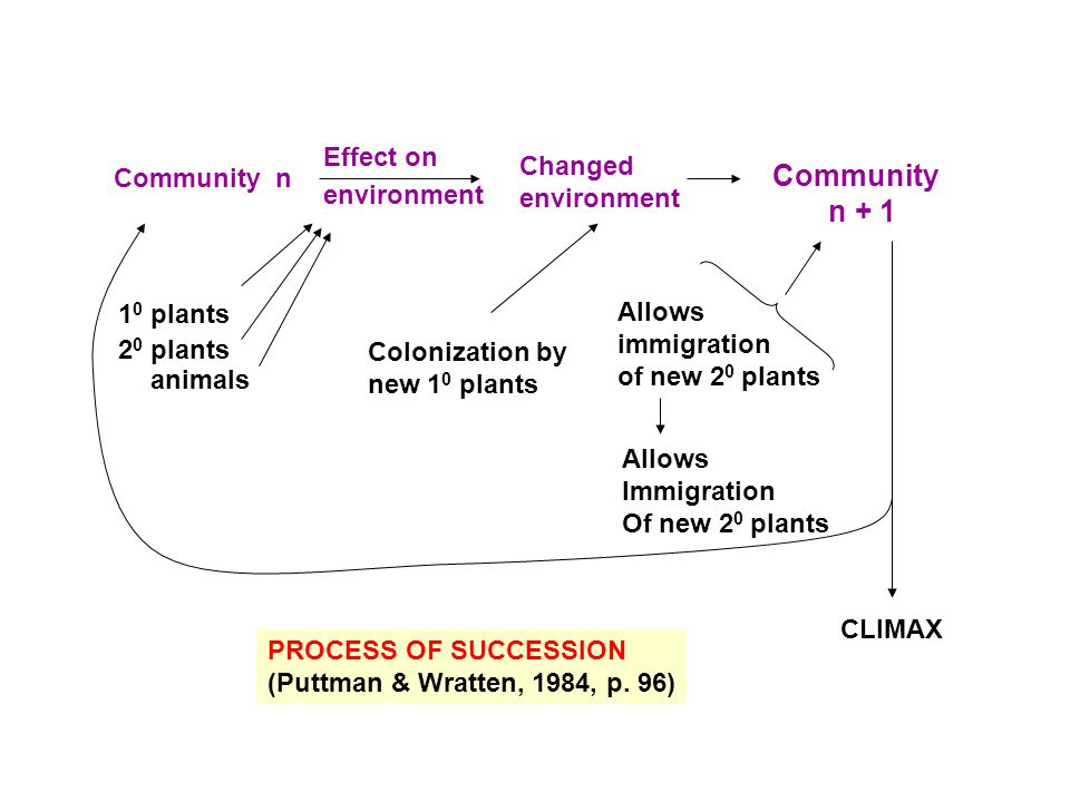 Community n + 1 Effect on Changed environment Community n 10 plants