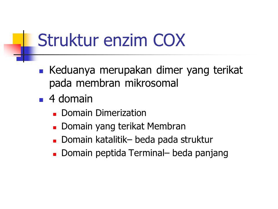 Struktur enzim COX Keduanya merupakan dimer yang terikat pada membran mikrosomal. 4 domain. Domain Dimerization.