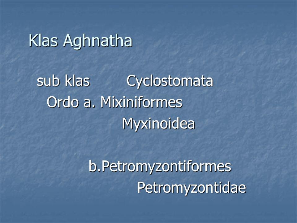 Klas Aghnatha Ordo a. Mixiniformes Myxinoidea b.Petromyzontiformes