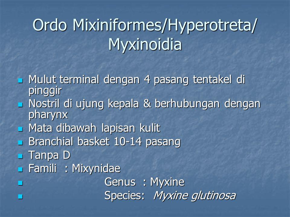 Ordo Mixiniformes/Hyperotreta/ Myxinoidia