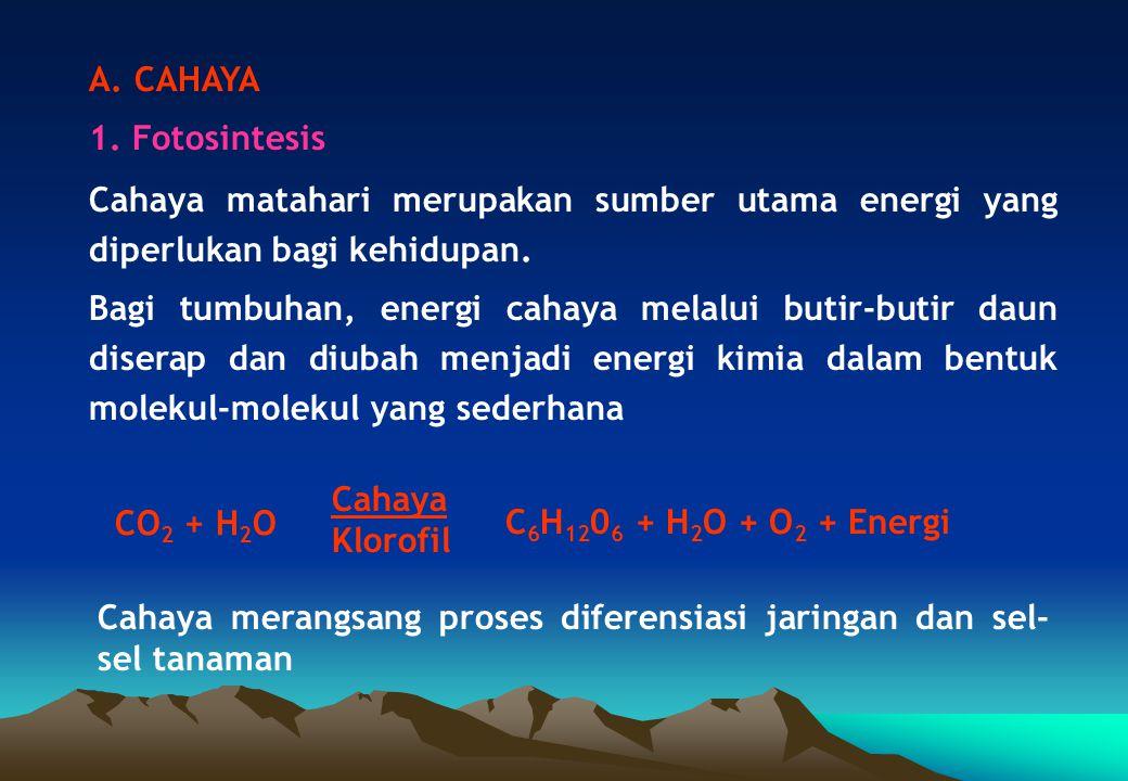 A. CAHAYA 1. Fotosintesis. Cahaya matahari merupakan sumber utama energi yang diperlukan bagi kehidupan.