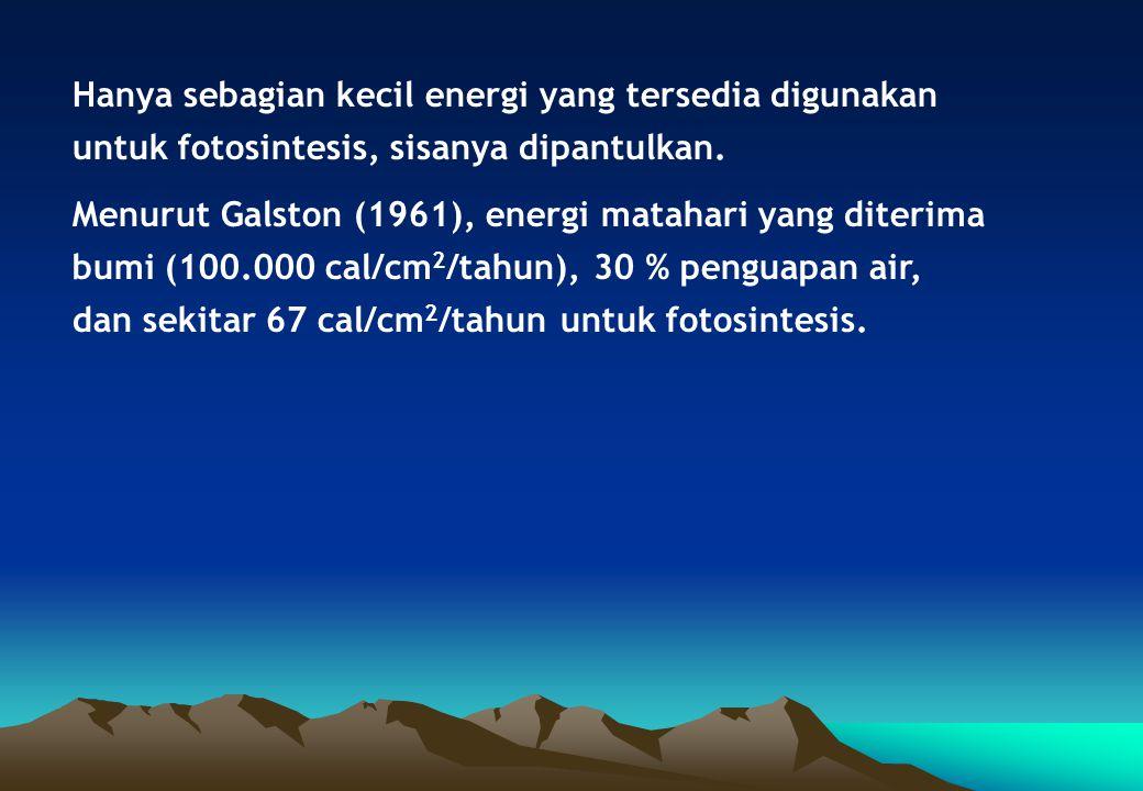 Hanya sebagian kecil energi yang tersedia digunakan untuk fotosintesis, sisanya dipantulkan.