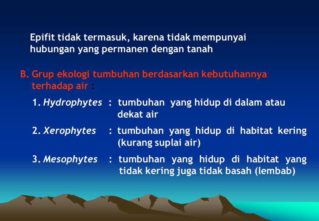 Epifit tidak termasuk, karena tidak mempunyai hubungan yang permanen dengan tanah