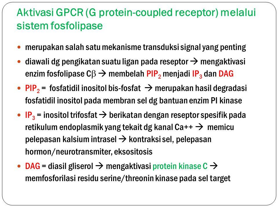 Aktivasi GPCR (G protein-coupled receptor) melalui sistem fosfolipase