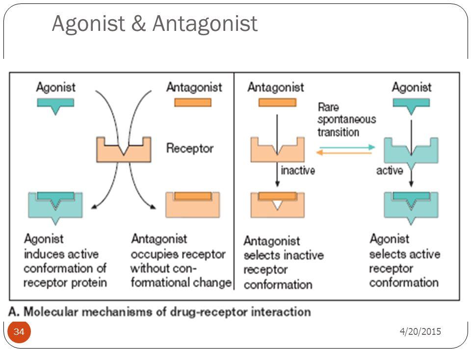 Agonist & Antagonist 4/13/2017