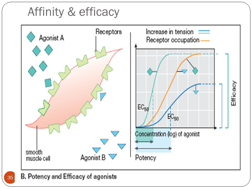 Affinity & efficacy 4/13/2017