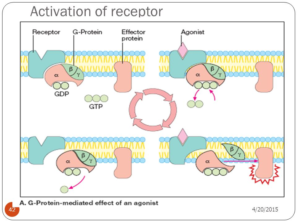 Activation of receptor