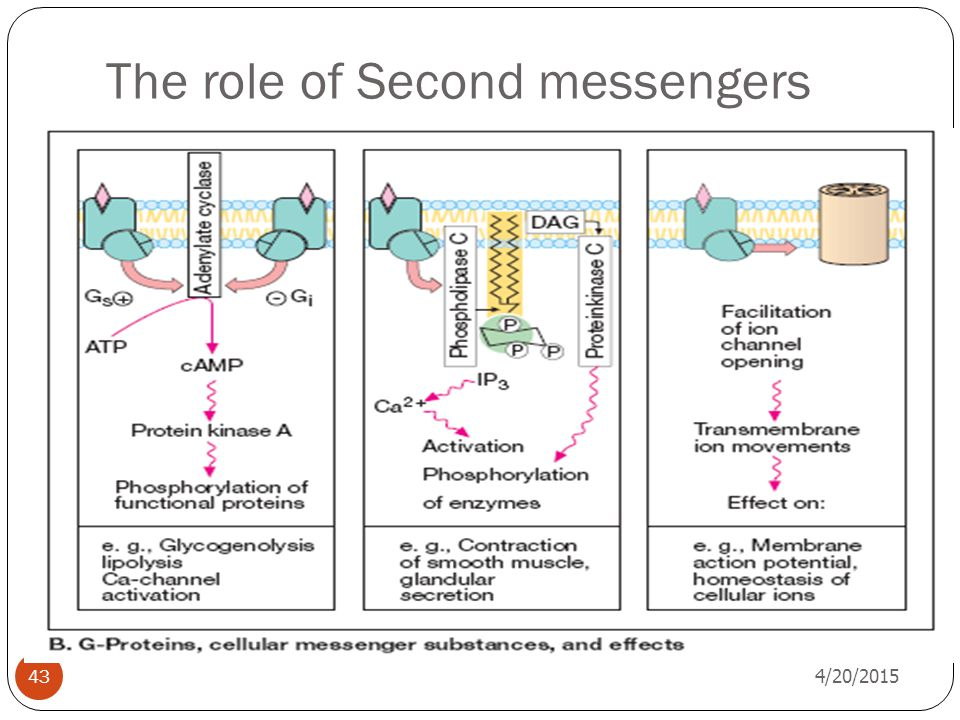 The role of Second messengers