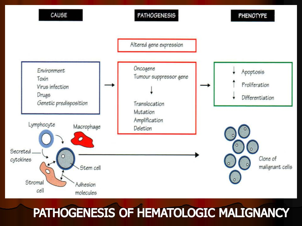 PATHOGENESIS OF HEMATOLOGIC MALIGNANCY