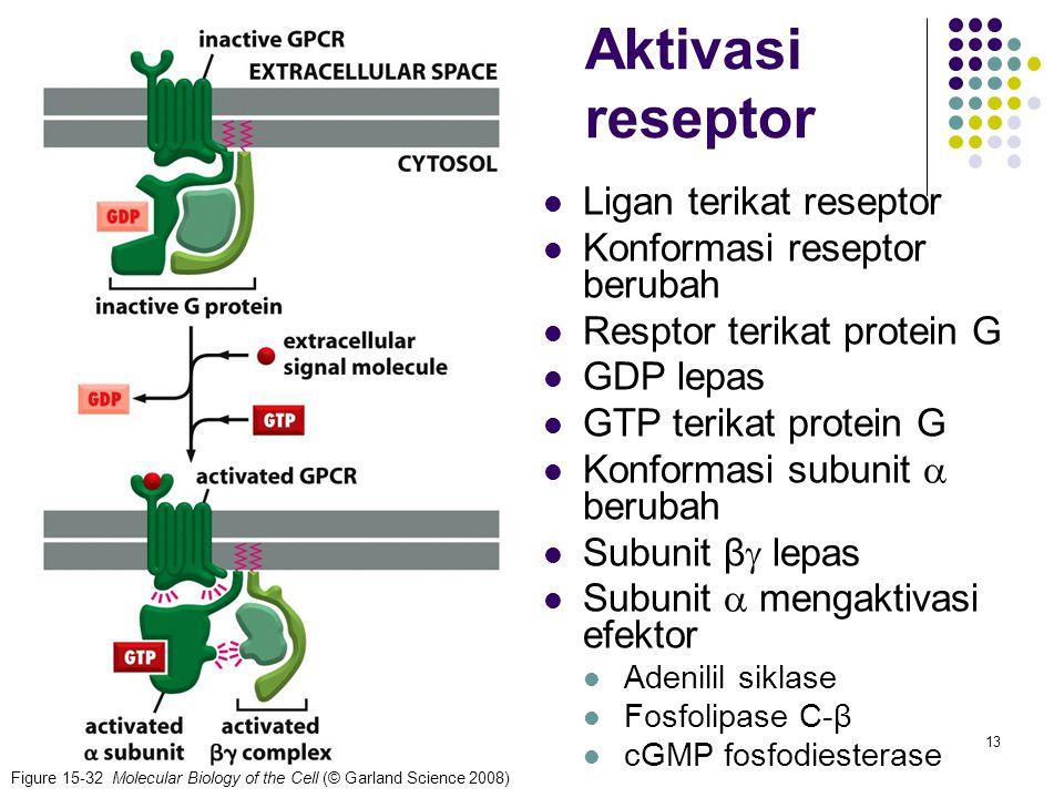 Aktivasi reseptor Ligan terikat reseptor Konformasi reseptor berubah
