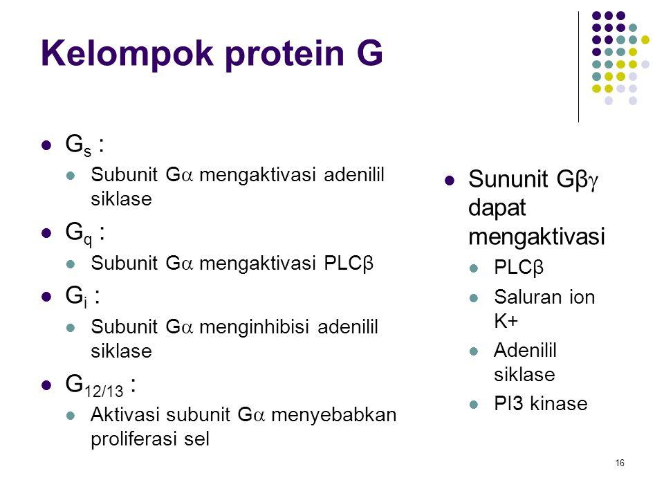 Kelompok protein G Gs : Sununit Gβ dapat mengaktivasi Gq : Gi :