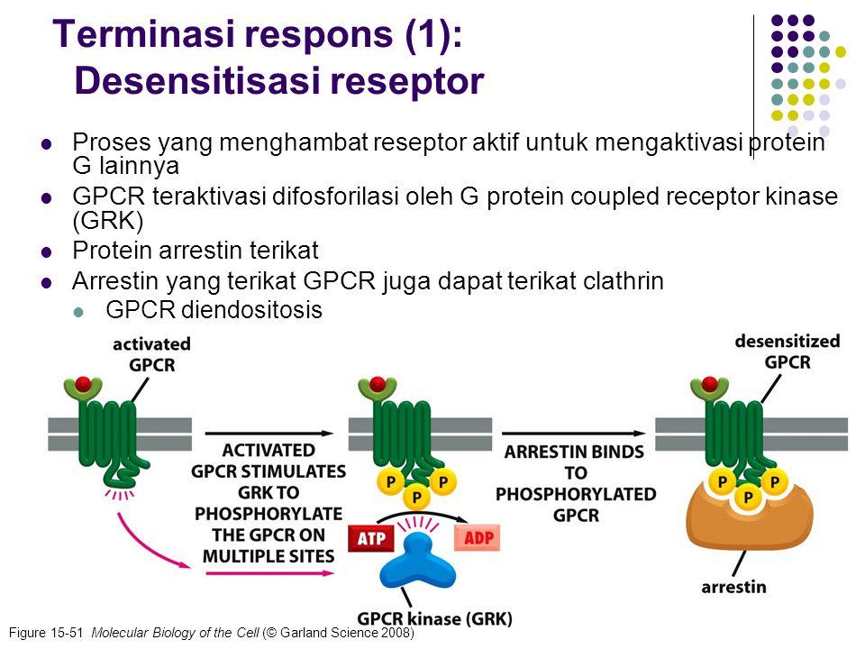 Terminasi respons (1): Desensitisasi reseptor