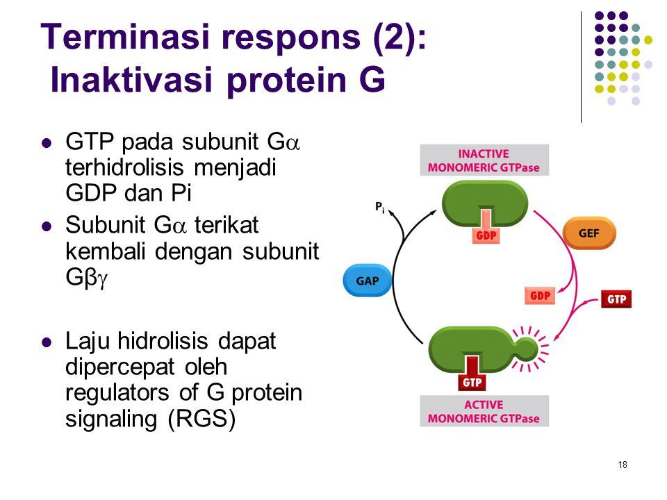 Terminasi respons (2): Inaktivasi protein G