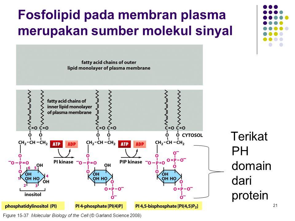 Fosfolipid pada membran plasma merupakan sumber molekul sinyal