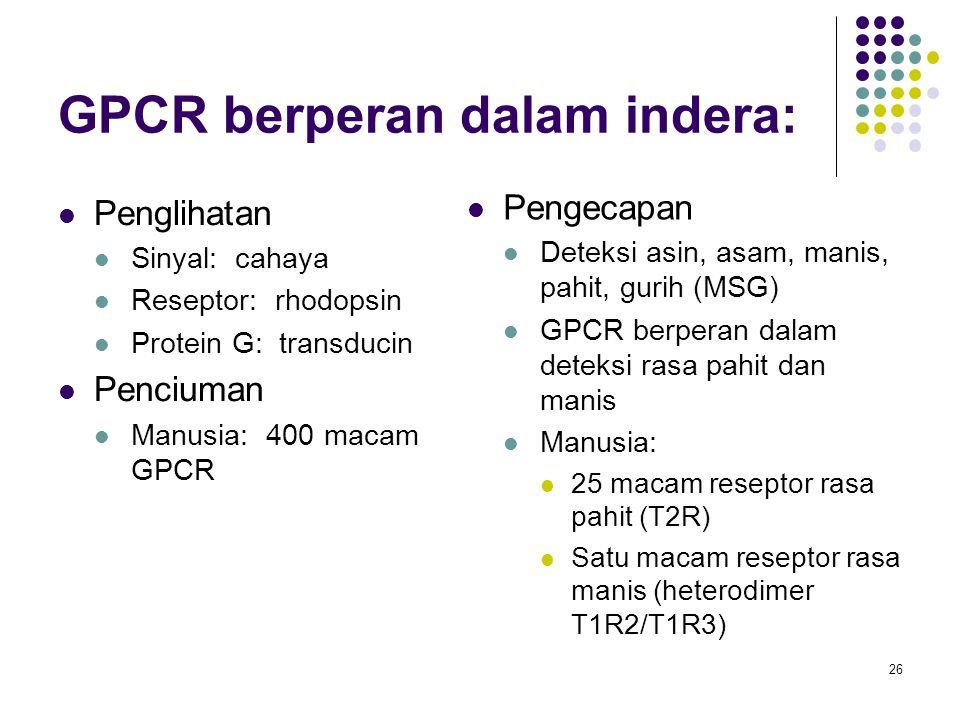 GPCR berperan dalam indera: