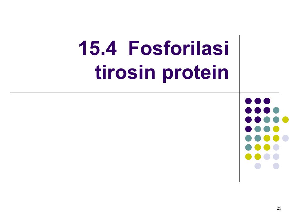15.4 Fosforilasi tirosin protein
