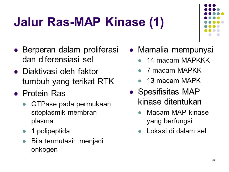Jalur Ras-MAP Kinase (1)