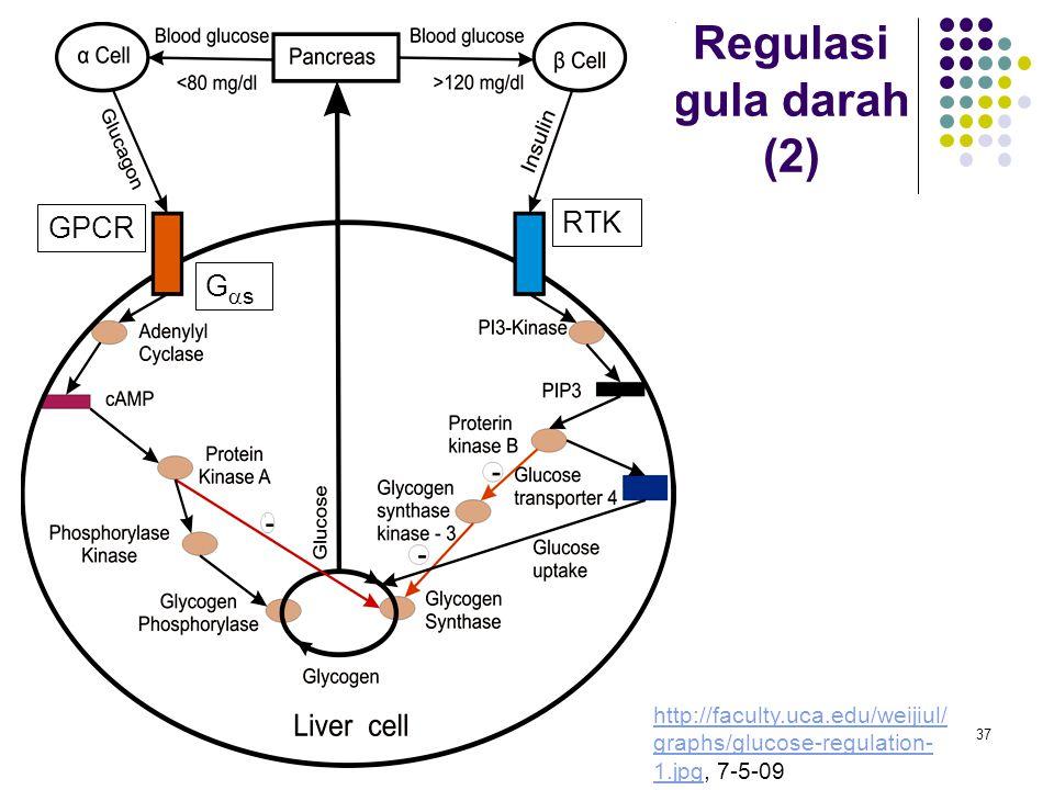 Regulasi gula darah (2) RTK GPCR Gs