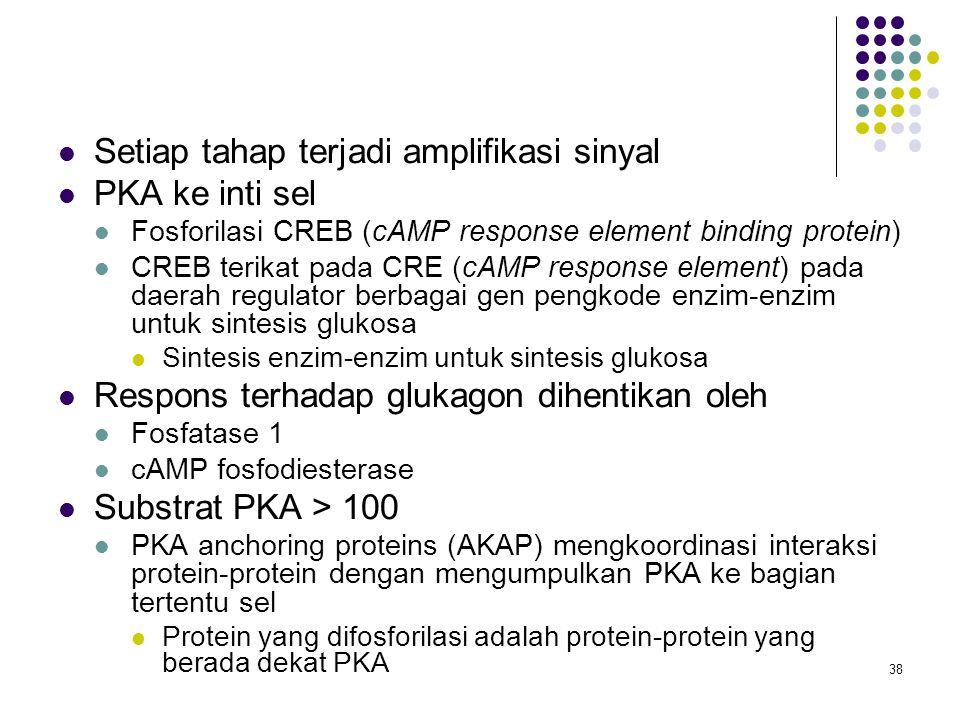 Setiap tahap terjadi amplifikasi sinyal PKA ke inti sel
