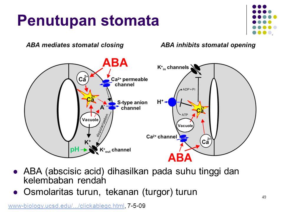 Penutupan stomata ABA (abscisic acid) dihasilkan pada suhu tinggi dan kelembaban rendah. Osmolaritas turun, tekanan (turgor) turun.