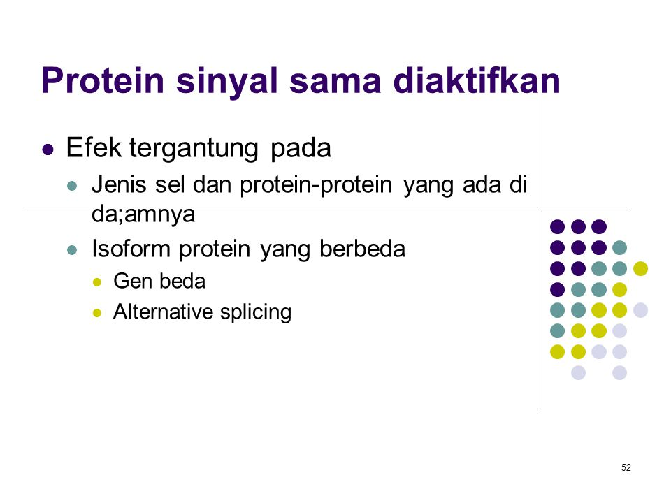 Protein sinyal sama diaktifkan