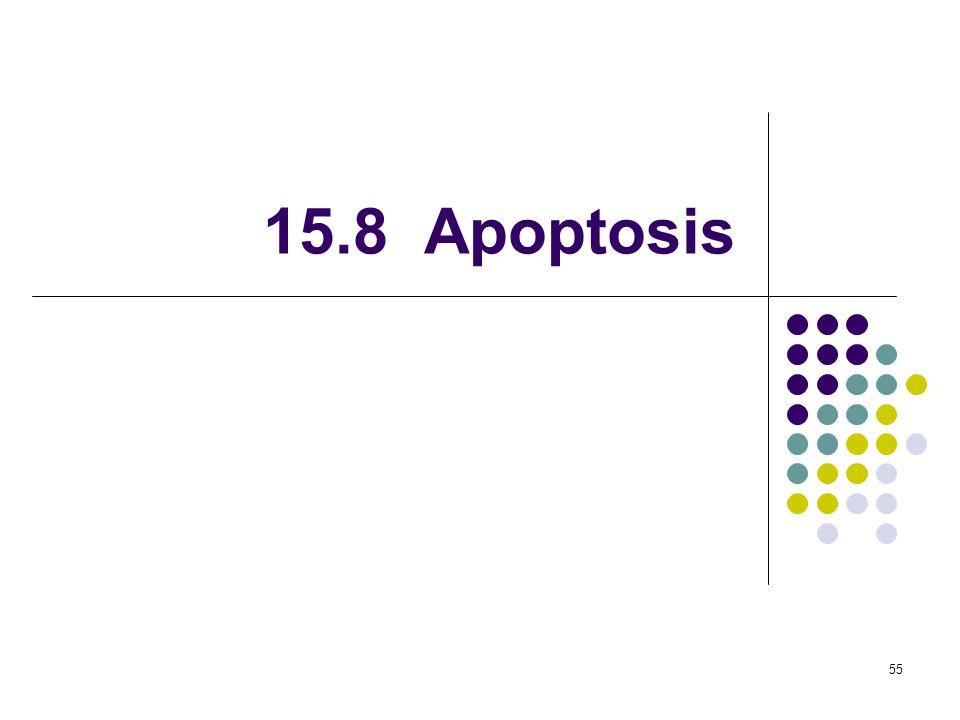 15.8 Apoptosis