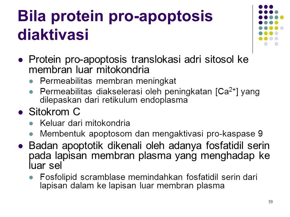 Bila protein pro-apoptosis diaktivasi