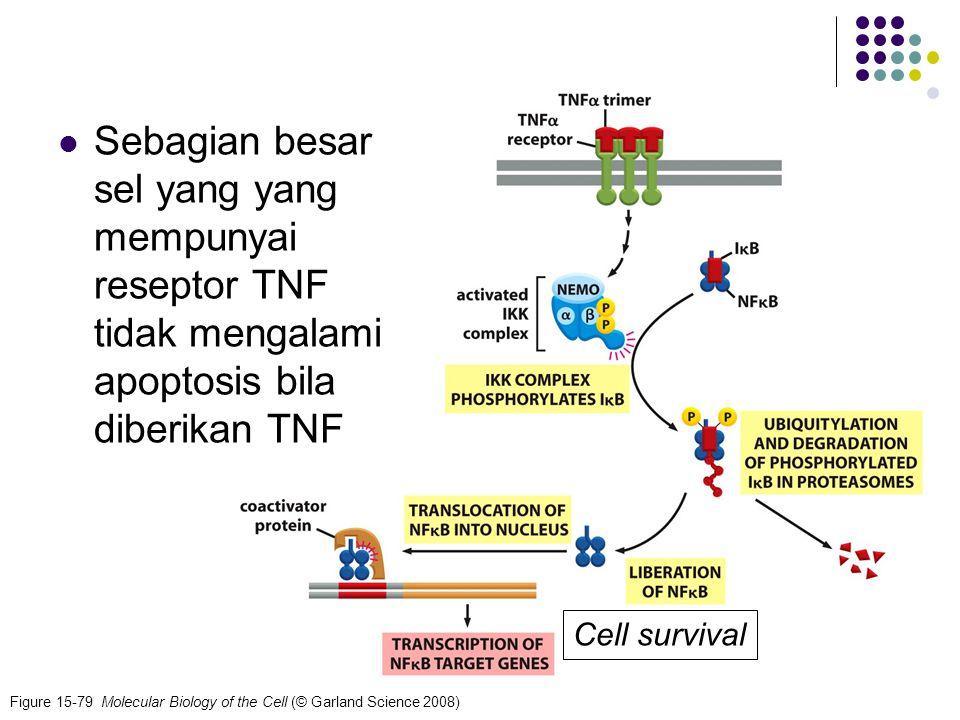 Sebagian besar sel yang yang mempunyai reseptor TNF tidak mengalami apoptosis bila diberikan TNF