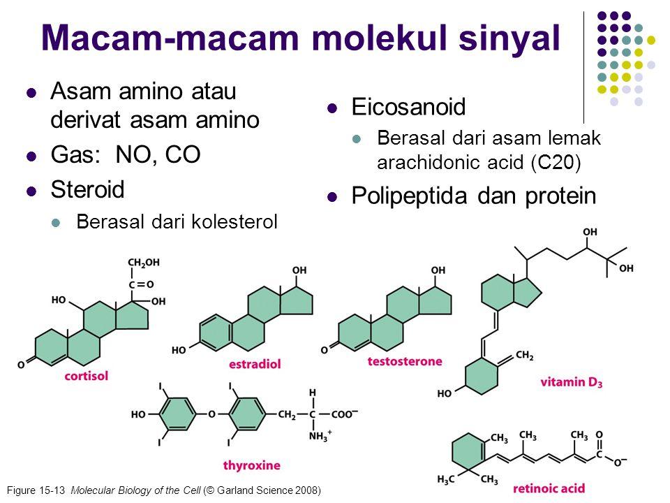Macam-macam molekul sinyal