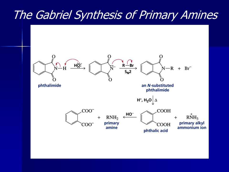The Gabriel Synthesis of Primary Amines