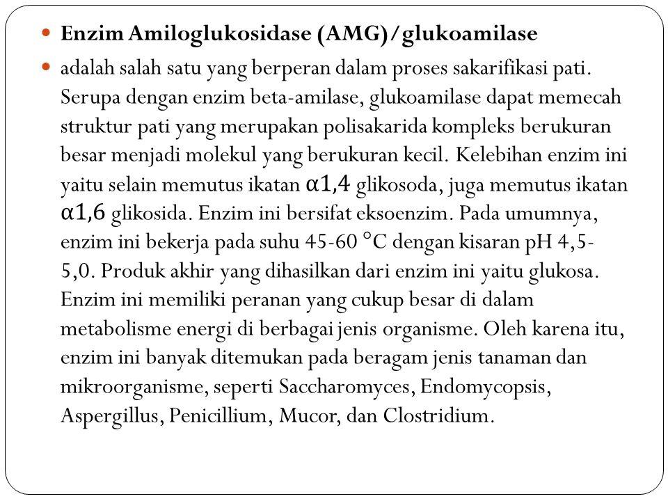 Enzim Amiloglukosidase (AMG)/glukoamilase