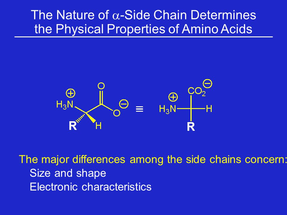 The Nature of a-Side Chain Determines the Physical Properties of Amino Acids