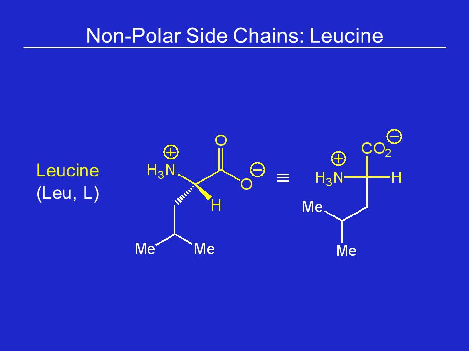 Non-Polar Side Chains: Leucine
