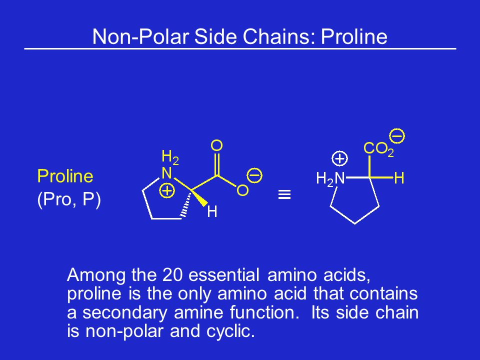 Non-Polar Side Chains: Proline