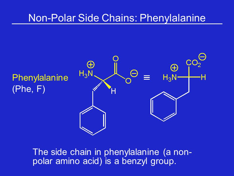 Non-Polar Side Chains: Phenylalanine