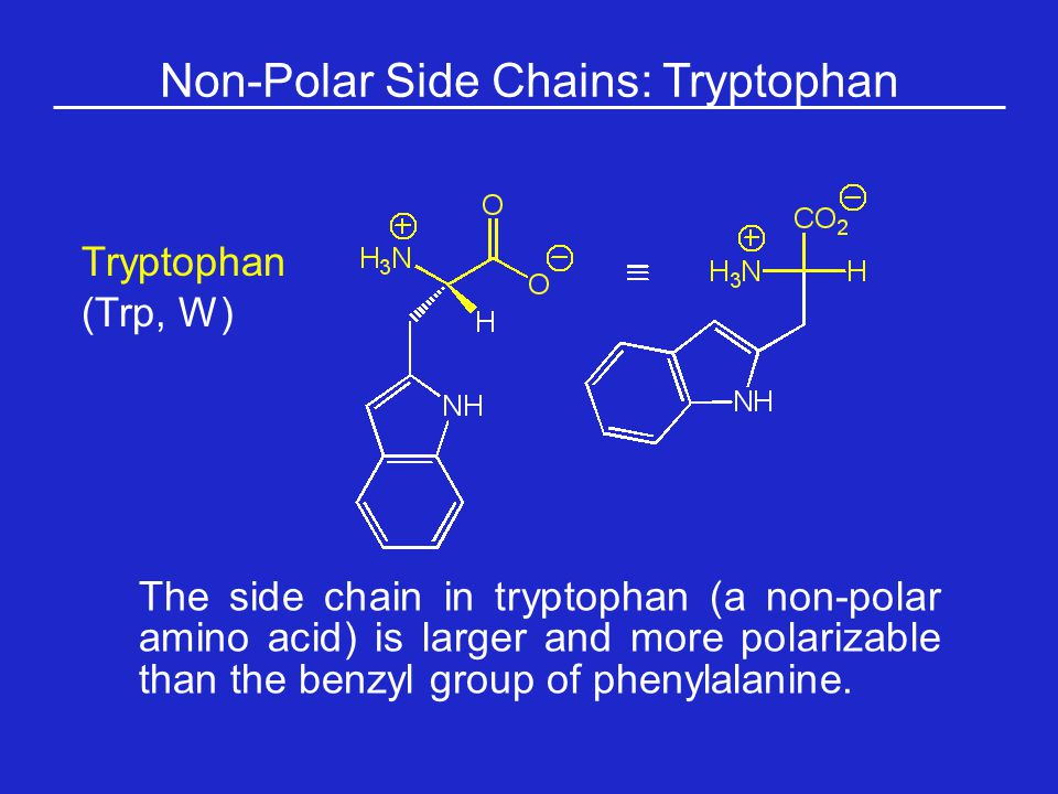 Non-Polar Side Chains: Tryptophan