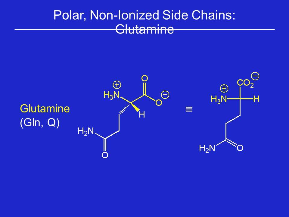 Polar, Non-Ionized Side Chains: Glutamine