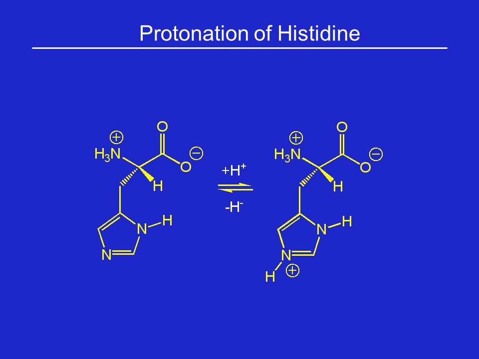 Protonation of Histidine