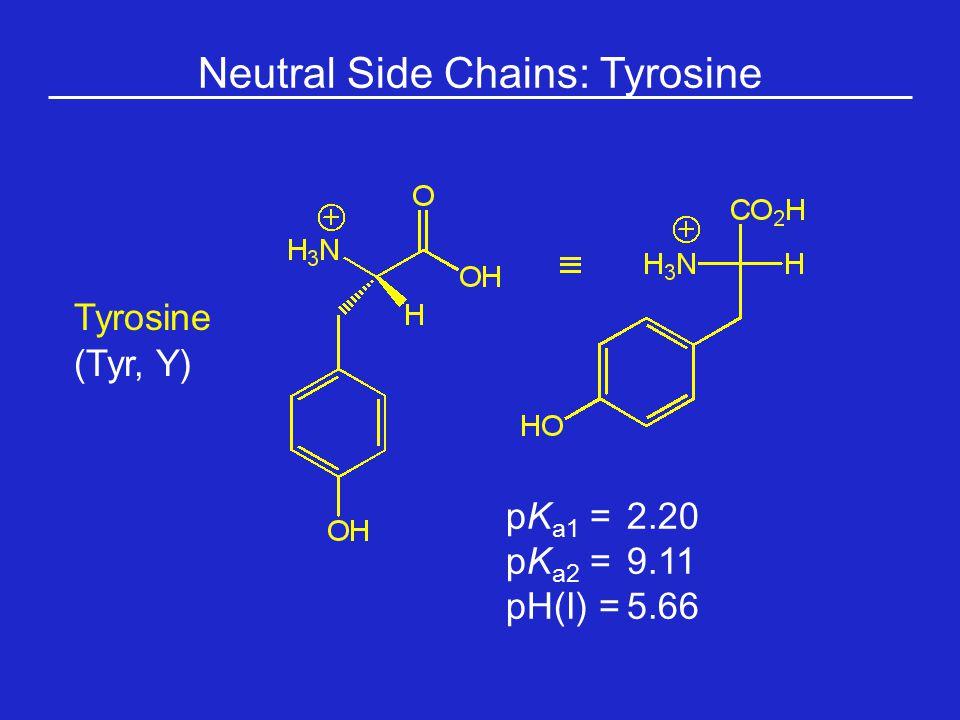 Neutral Side Chains: Tyrosine