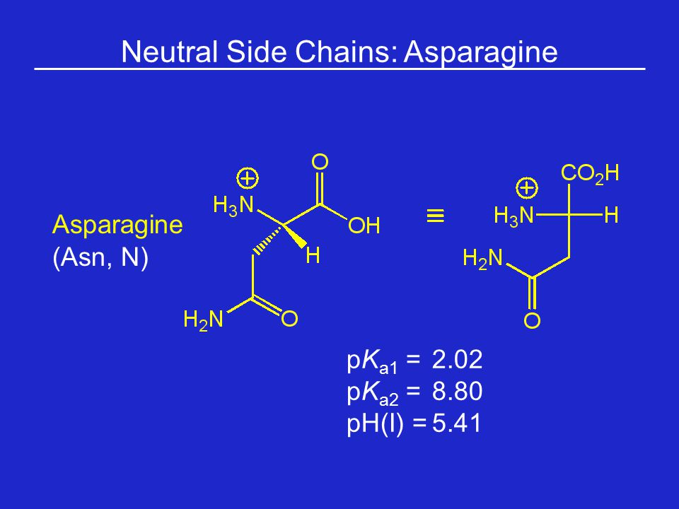 Neutral Side Chains: Asparagine