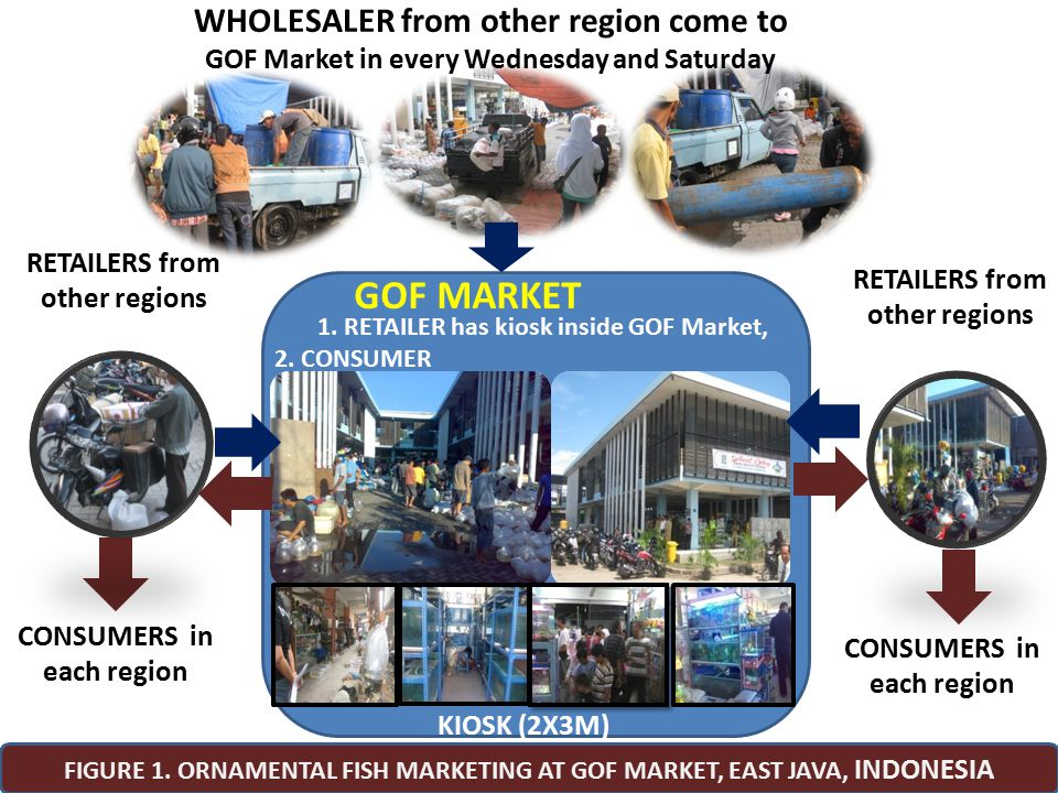 GOF MARKET WHOLESALER from other region come to
