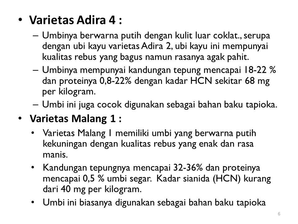 Varietas Adira 4 : Varietas Malang 1 :
