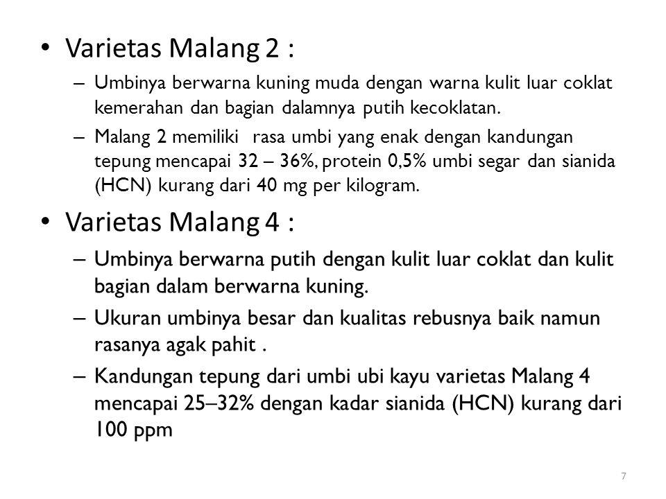 Varietas Malang 2 : Varietas Malang 4 :
