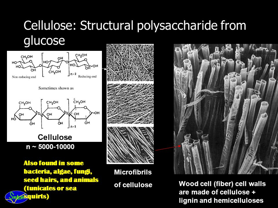 Cellulose: Structural polysaccharide from glucose