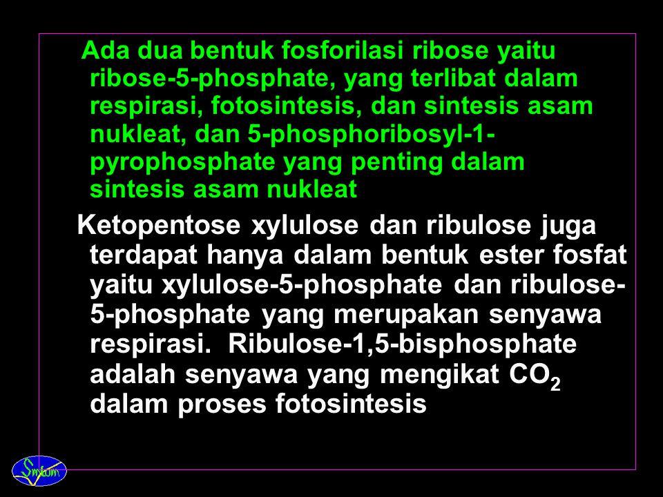 Ada dua bentuk fosforilasi ribose yaitu ribose-5-phosphate, yang terlibat dalam respirasi, fotosintesis, dan sintesis asam nukleat, dan 5-phosphoribosyl-1-pyrophosphate yang penting dalam sintesis asam nukleat