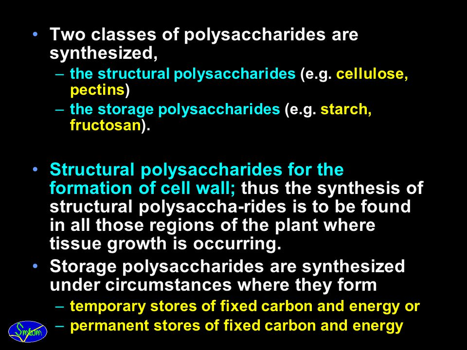 Two classes of polysaccharides are synthesized,